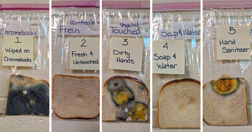The Bread experiment
